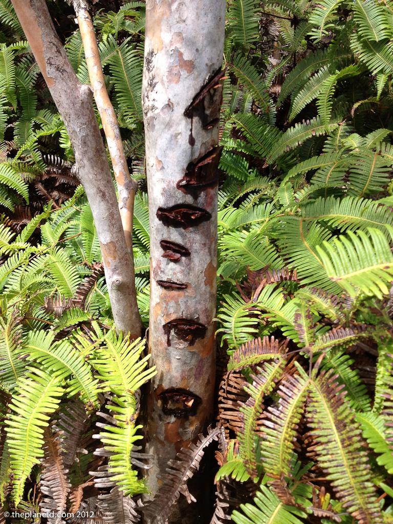 conservation in the hawaiian island of lanai