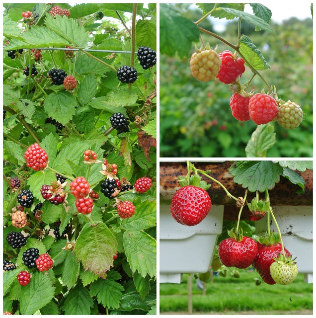 PYO fruit