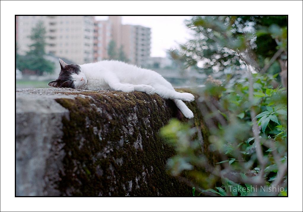 塀の上の昼寝 #2 / Sleeping on wall #2