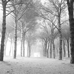 woodland, fog, branch, winter, tree, monochrome photography, frost, forest, morning, monochrome, winter storm, blizzard, black-and-white, mist,