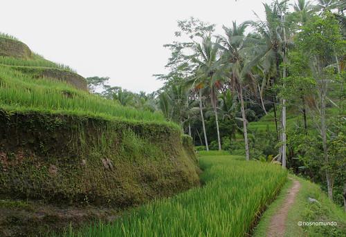 Os Arrozais de Tegalalang