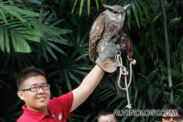 A fierce-looking owl