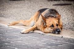 Dogs - Photo of Belmontet