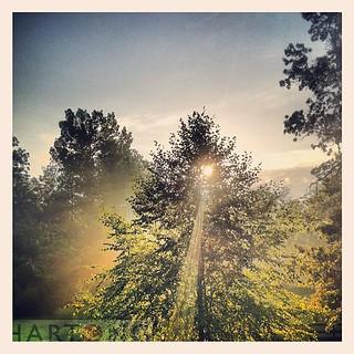 Good #Morning #Sunshine #hartongdigitalmedia #madeezseries