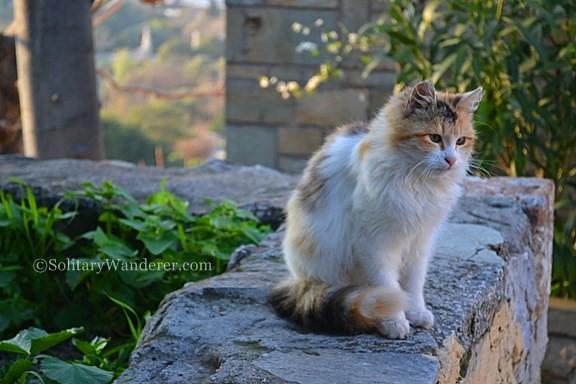 cat in athens