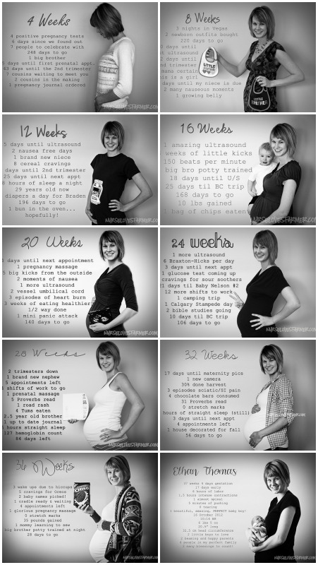 Monthly documentation of pregnancy progression using numbers as facts/statistics.