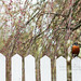 robin on the picket fence by mohini :: mangopowergirl.com