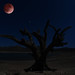 Blood Moon by Donald Palansky Photography