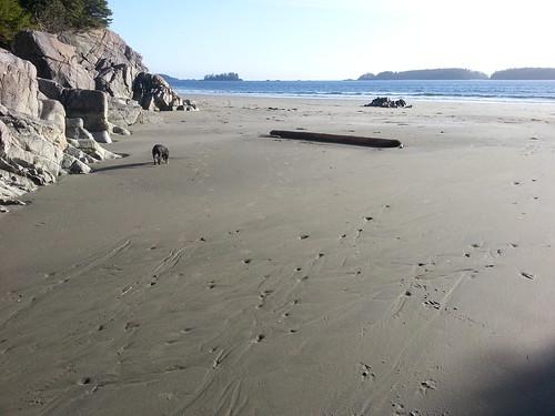 Beach Nest, Tofino, British Columbia