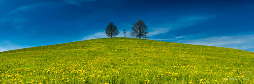 La colline en fleurs (Switzerland)