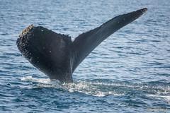 USA: CA, Monterey Bay