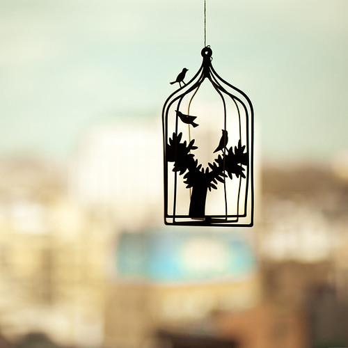 caged_ipadr