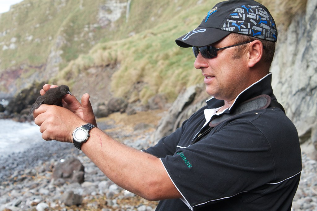 Trevor Glass, Conservation Officer for Tristan da Cunha shows us an Inaccessible Island Rail