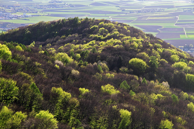 The landscape around Neulengbach  in Austria during spring.
