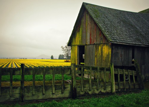 03-29-12 Rainy Day Sunshine by roswellsgirl
