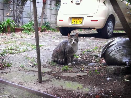 Katze nachmittag