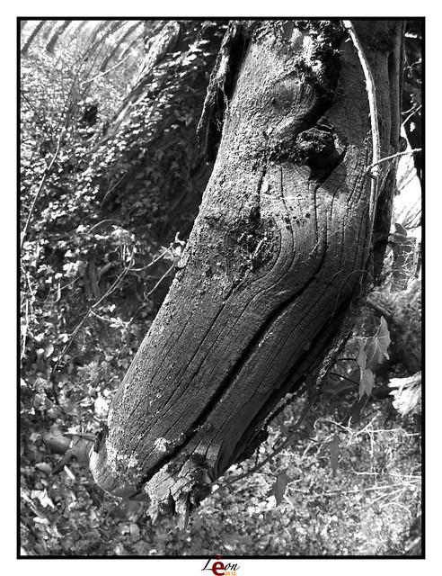 Le peuple de la forêt - Page 3 7051698423_fd5167417a_z
