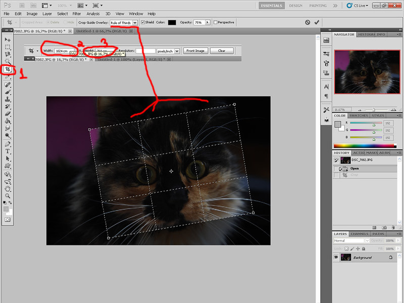 Зеленая виртуальная кошка 7054282669_4b18dea67b_c