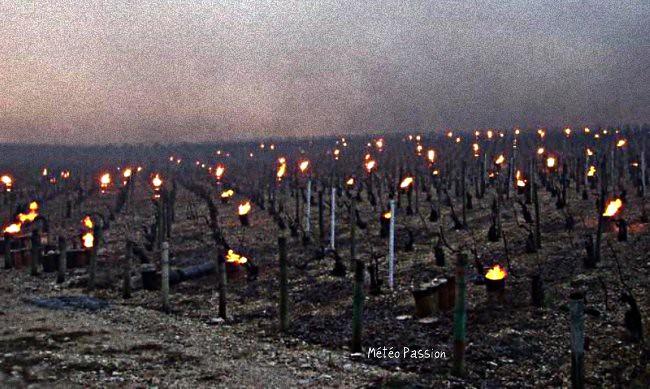 chaufferettes anti-gel dans des parcelles de vignes météopassion