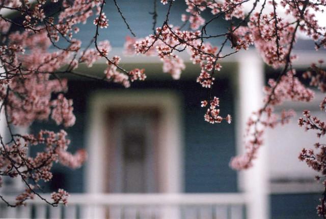 home, Nikon FM2
