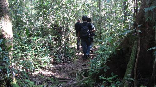 Walk to the Orangutan Feeding Point