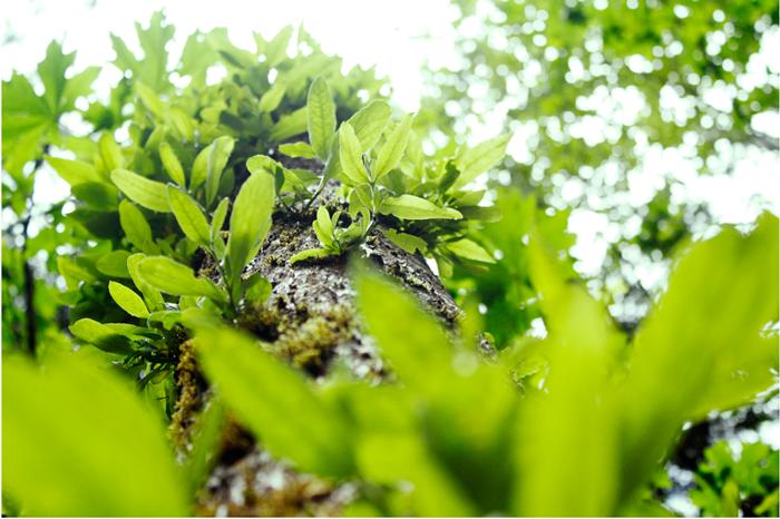 {tree greenery}