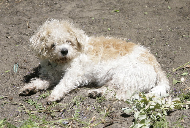 Dog in a warm patch of dirt.