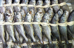 fish, fish, seafood, capelin, food, shishamo,