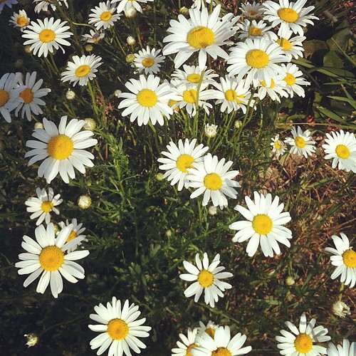 Daisies are the friendliest flower, don't you think?  #noraephron