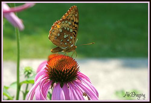 Pretty Little Butterfly by akgregory26