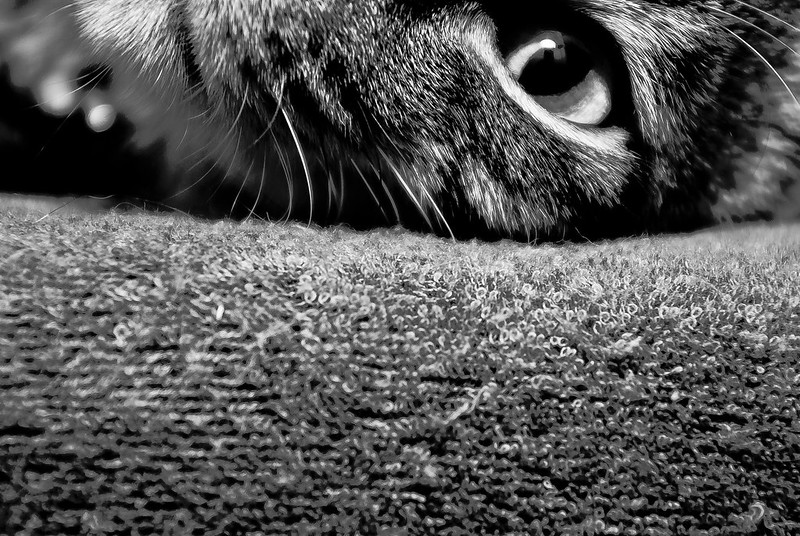 不一樣的貓咪紀錄