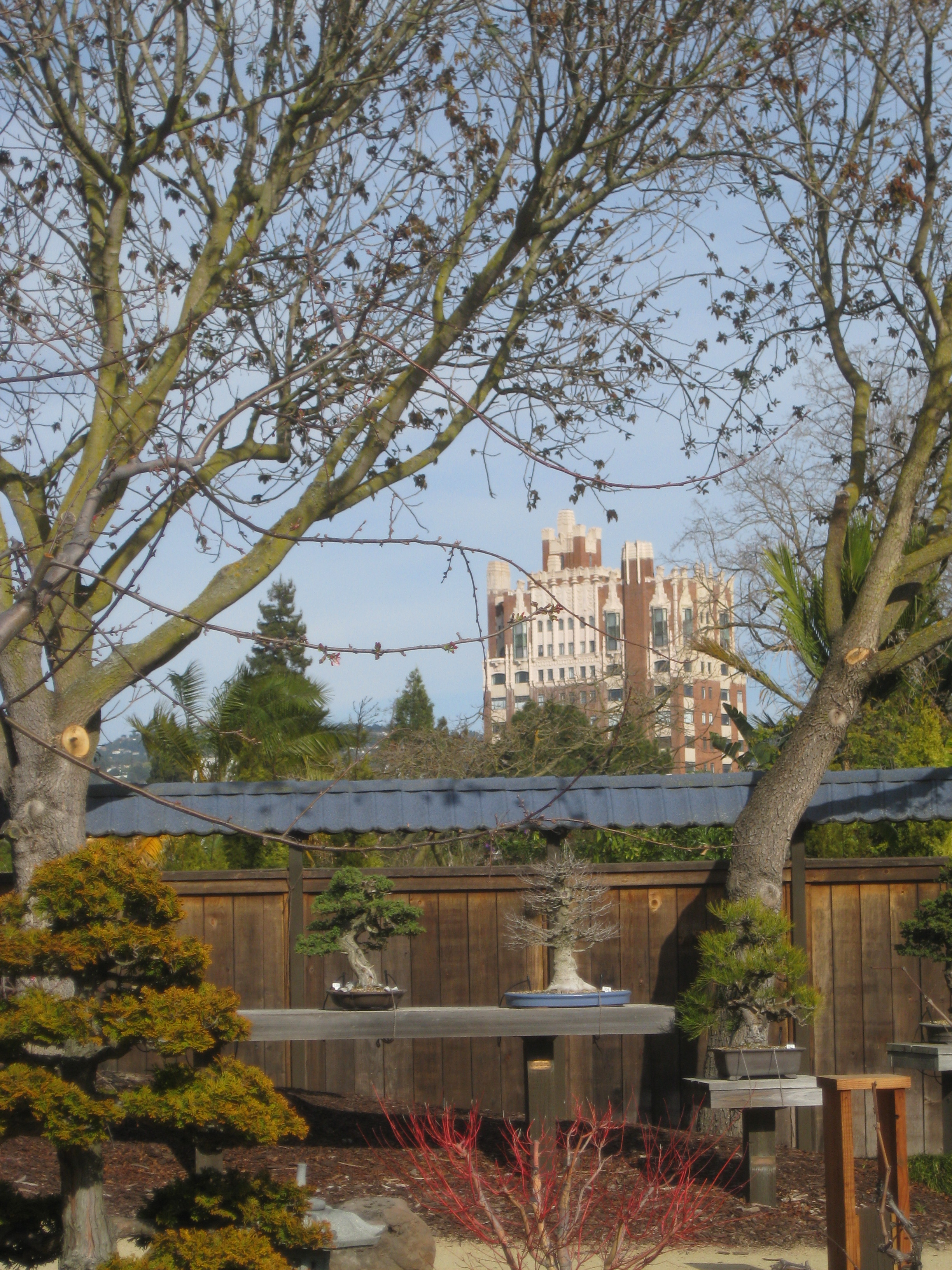 Bonsai Garden Oakland California Flickr Photo Sharing