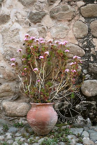 flowers flores rock wall florida bolivia pot vase flowering pedra vaso parede bolívia potosí potosi mariaadelaidesilva