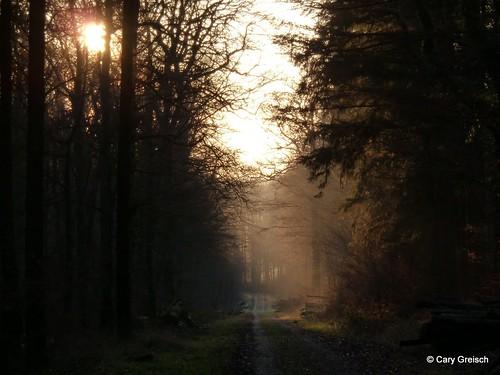 luxembourg lux forêt carygreisch berbourg berbuergerbësch