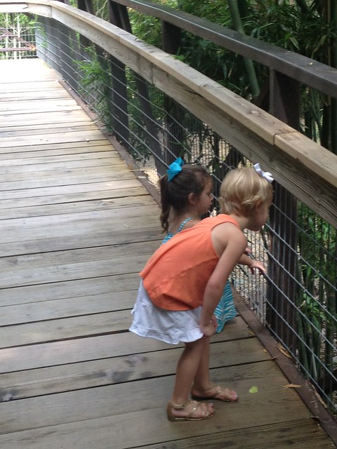 Kinley & eden looking at zoo