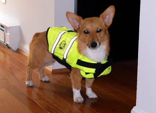 Maggie in her life jacket