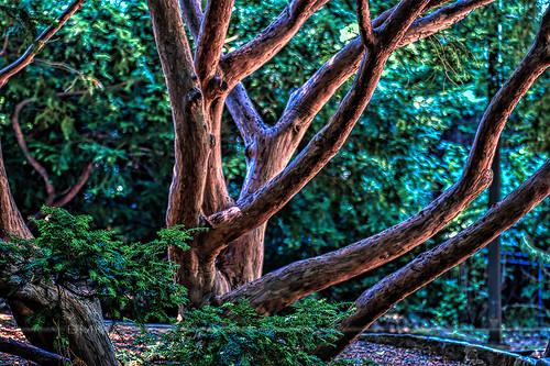 summer tree philadelphia zoo nikon fourthofjuly hdr 2012 philadelphiazoo d90