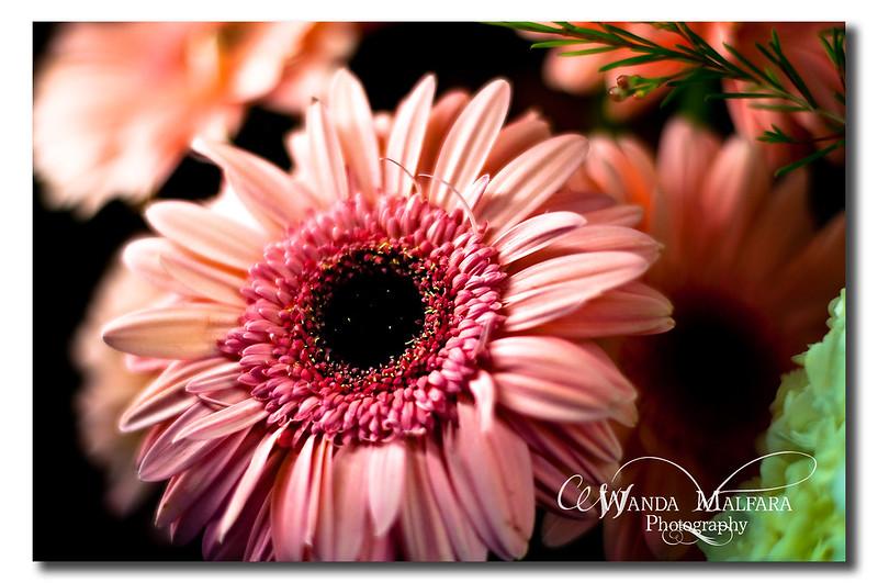 Flowers 042 wm