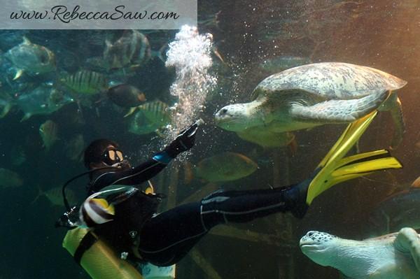 Singora Tram Tour - songkhla aquarium thailand-013