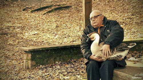 wood autumn portrait man love animals sepia automne friendship goose amitié homme oie loverval