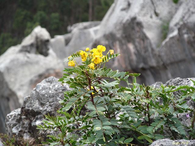 Siempre crecen flores, aún entre las piedras