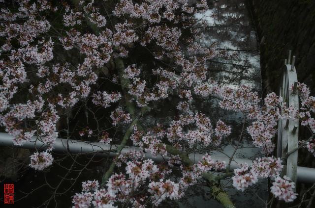 「印象」 哲学の道 - 京都