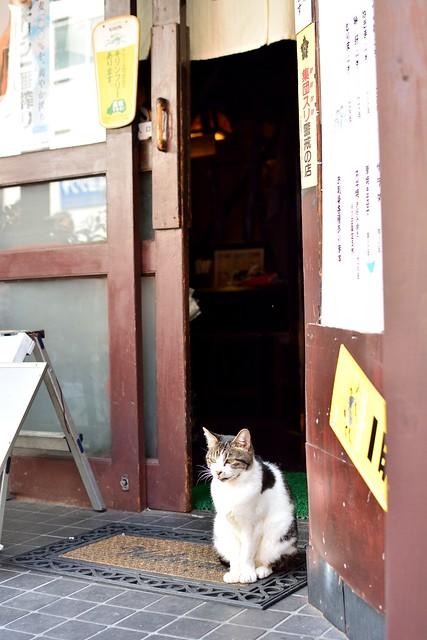 大須商店街6