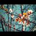 79/366: spring by nyah74