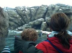 20120325 calgary zoo - 20
