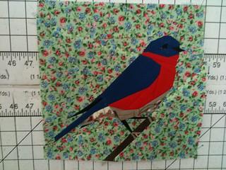 Bluebird Blk 6