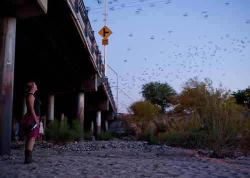An Eruption of Bats