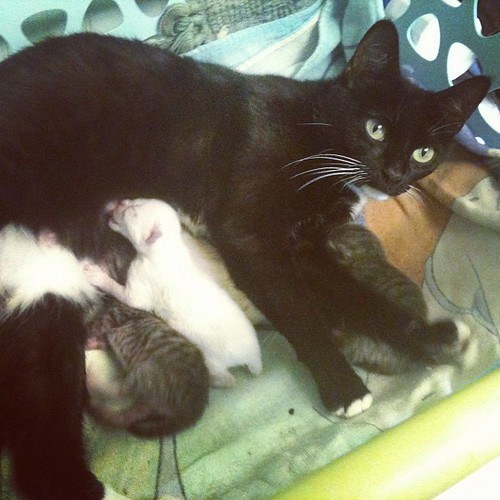 Gentilly and her new babies