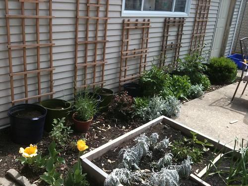 Trellises, Pots, Herbs