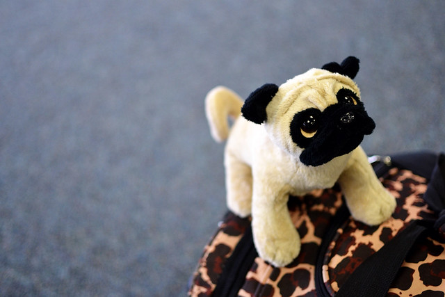 Stuffed pug toy